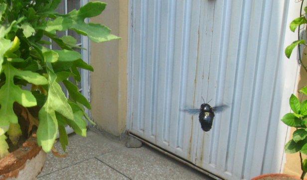 bee pot plant