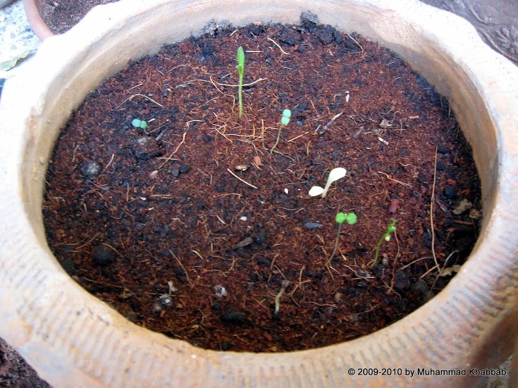 seedling42 Fall plantings