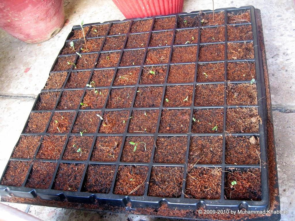 seedling62 Fall plantings