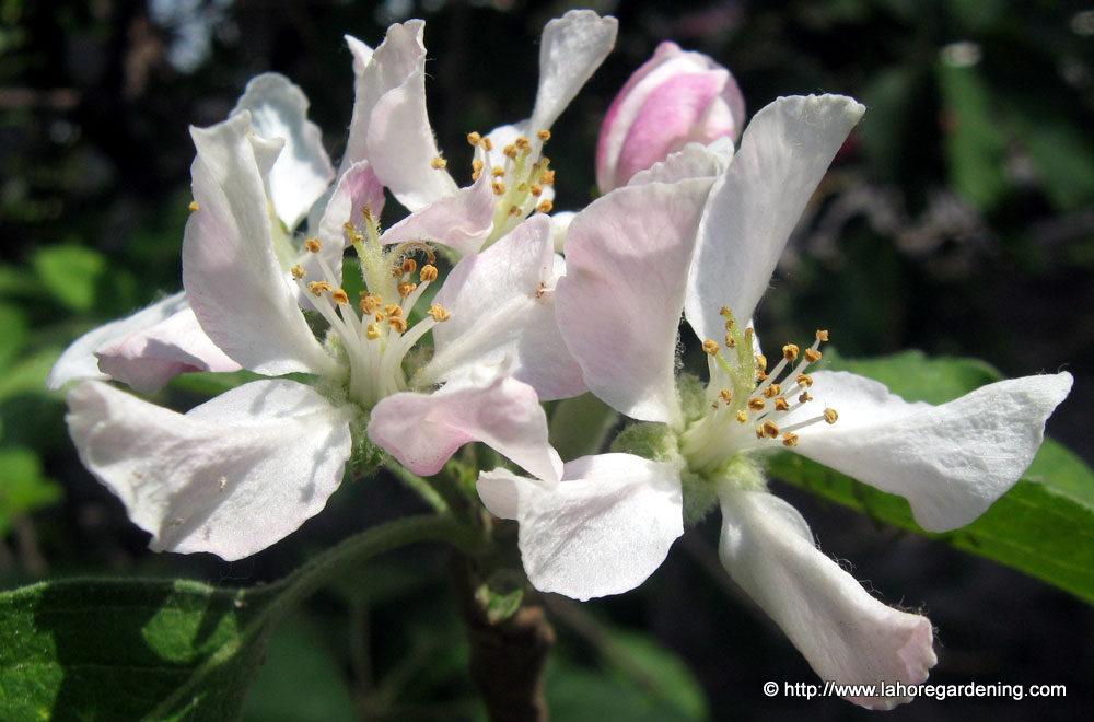 lawrence gardens tree