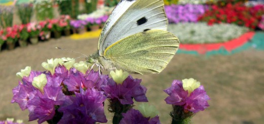 butterfly-on-paperflower2