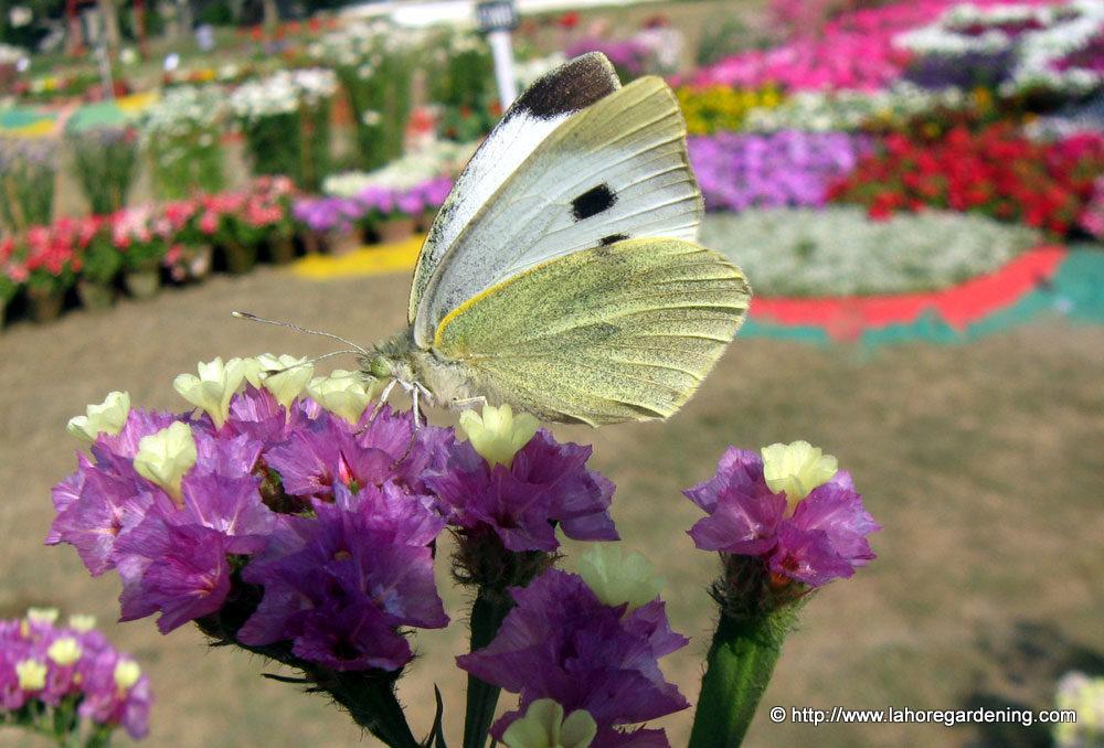 butterfly on paper flower
